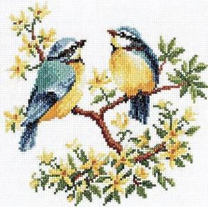 Birdsong Duet CS Picture